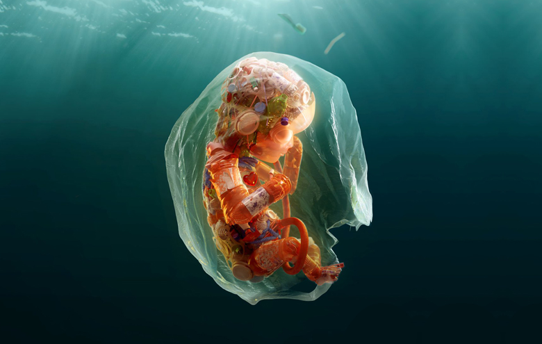 Plastic Pollution Effects on Human